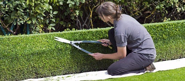 Trimming Bush