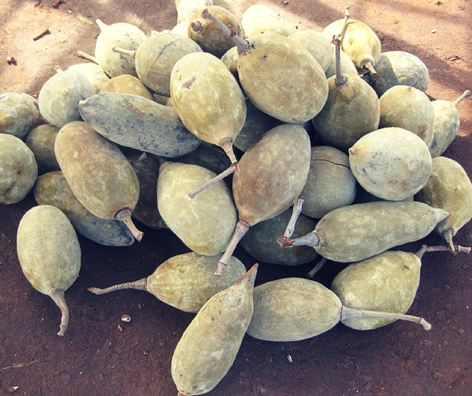 This Is How Baobab Fruit Looks Like.