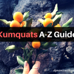 Kumquat GUIDE: Tree Facts | Benefits | How to Eat and More!