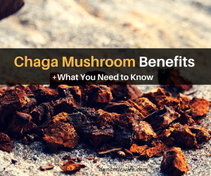 Chaga Mushroom Benefits + What You Need to Know